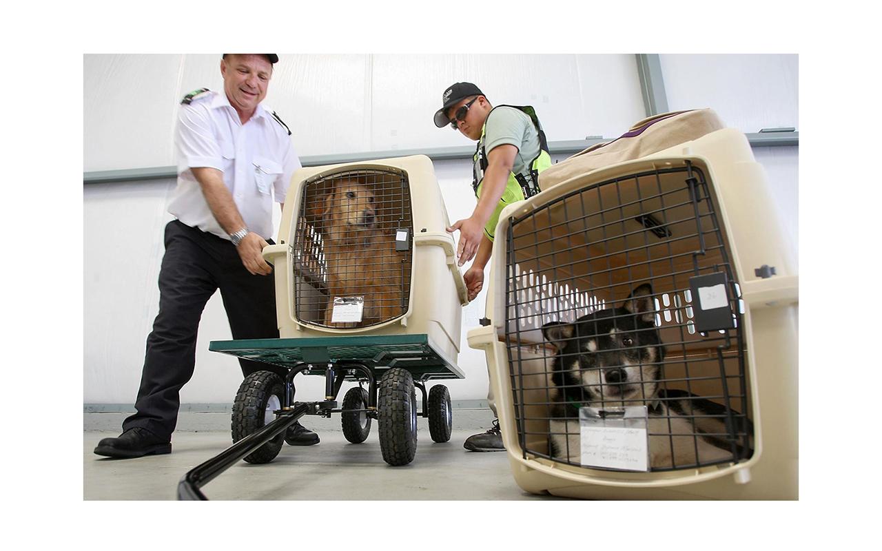 ارسال بار هوایی به کانادا در ارتباط با حیوانات
