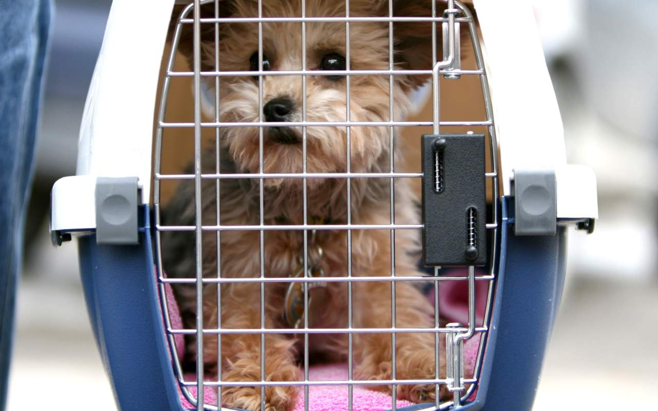 باربری به کانادا برای حیوانات خانگی هم امکانپذیر است.